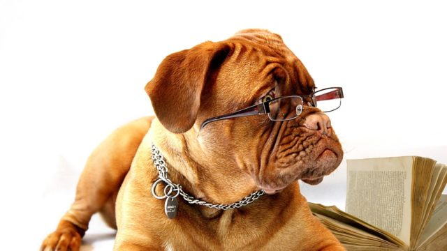 犬種の名前の由来(語源)は地名や特徴?犬と狗との違いと使い分けは?
