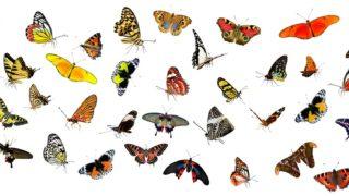 蛾と蝶の違いとは?区別/見分け方のポイントは飛び方や羽の閉じ方?