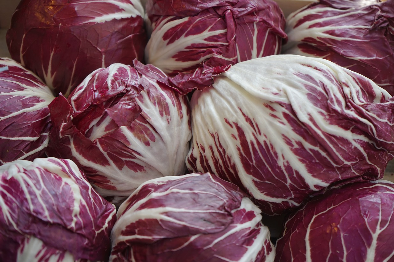トレビスとは野菜?紫キャベツとの違いは?苦い味?英語表記や栄養も!