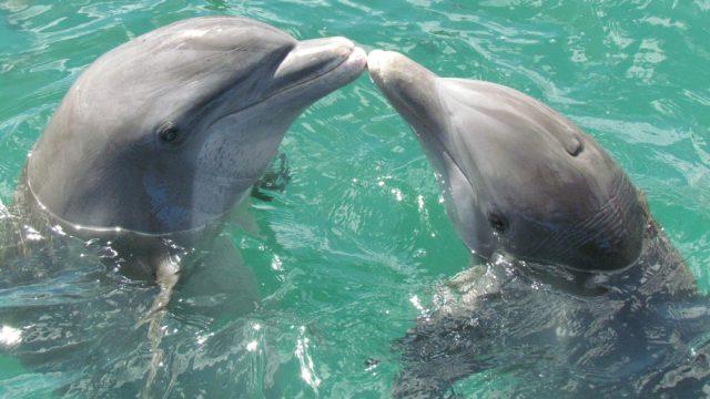 海豚の読み方や意味とは?語源/由来は中国語?河豚と関係ある?