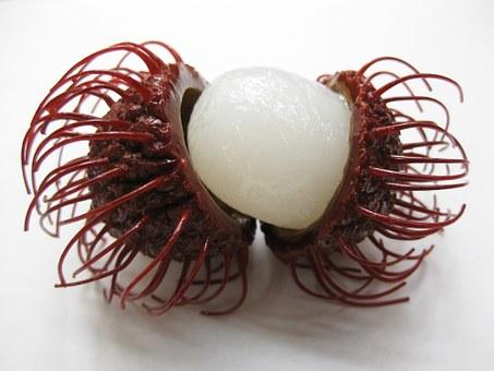 ランブータンとは果物?食べ方や味は?日本でも食べれる?英語表記も!