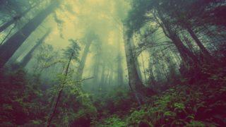 五里霧中の意味と由来や使い方(例文)は?暗中模索との違いは何?