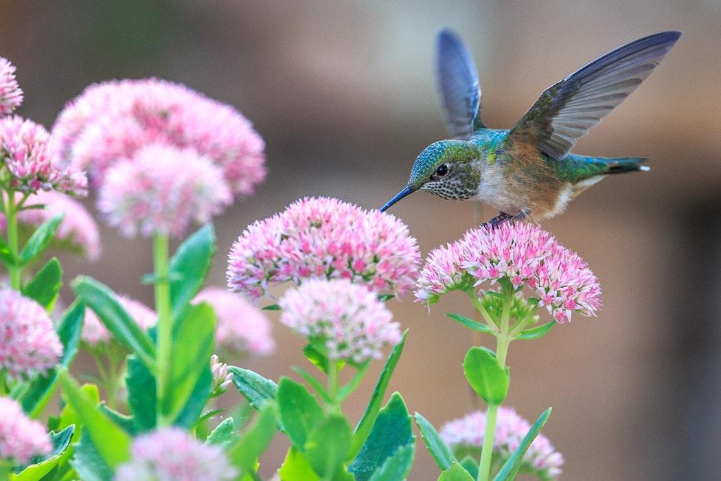 花鳥風月の意味とは?使い方を例文で紹介!語源(由来)や英語も調査!