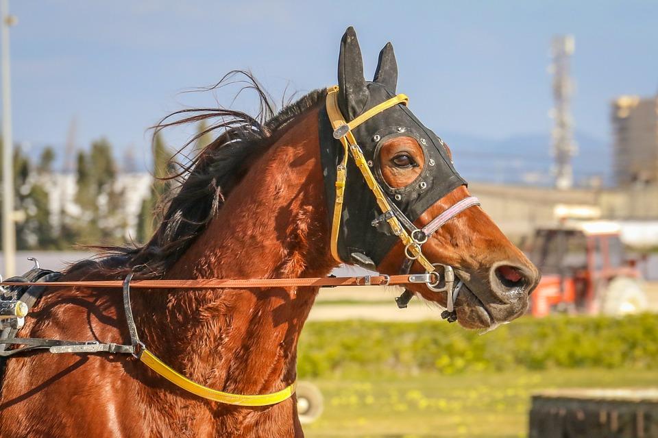 サラブレッドの意味とは?人間と馬どっちに使うの?英語が語源?