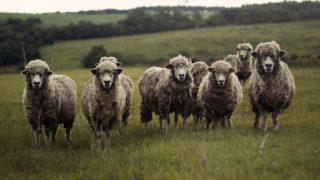 羊頭狗肉の意味とは?由来や使い方を紹介!故事成語/四字熟語どっち?
