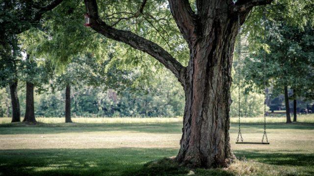 林と森の違いは?森林と樹海の使い分けと意味や語源由来を解説!