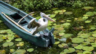 漁夫の利の意味とは?類語や使い方を面白い例文で!由来となった物語も!