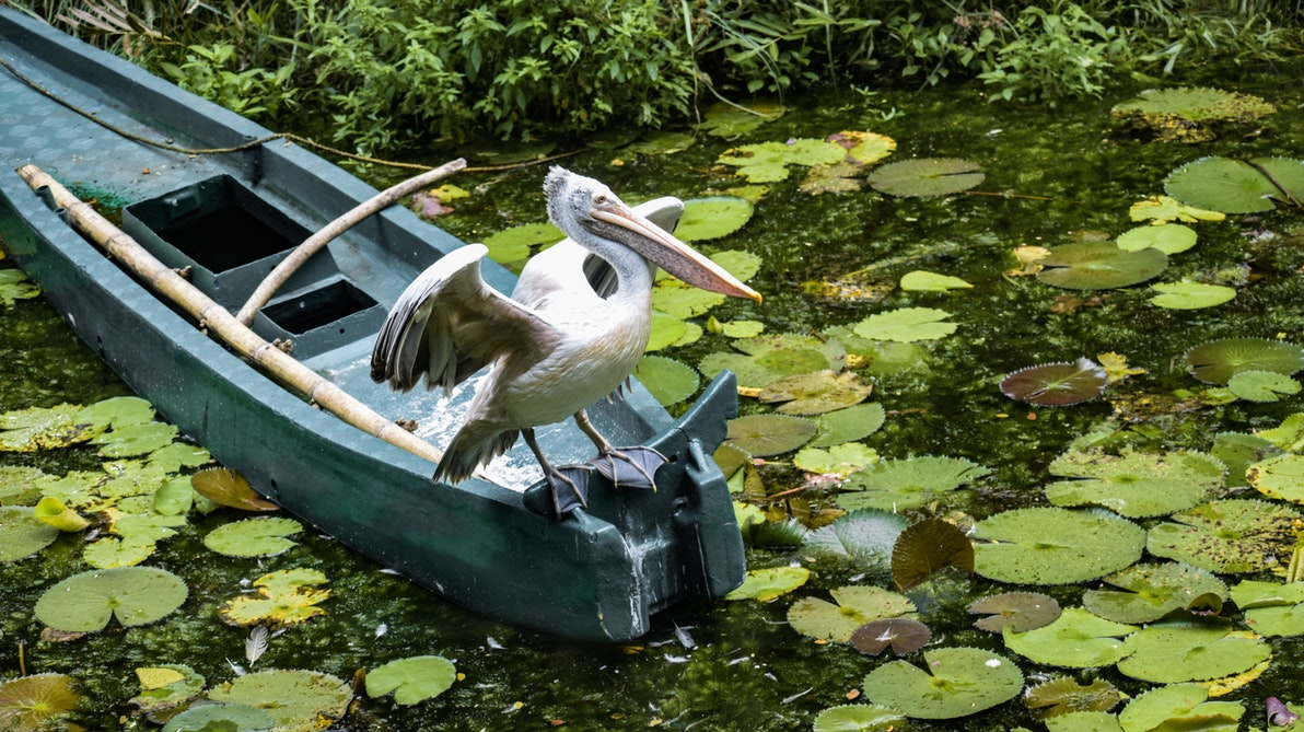 の 利 意味 漁夫