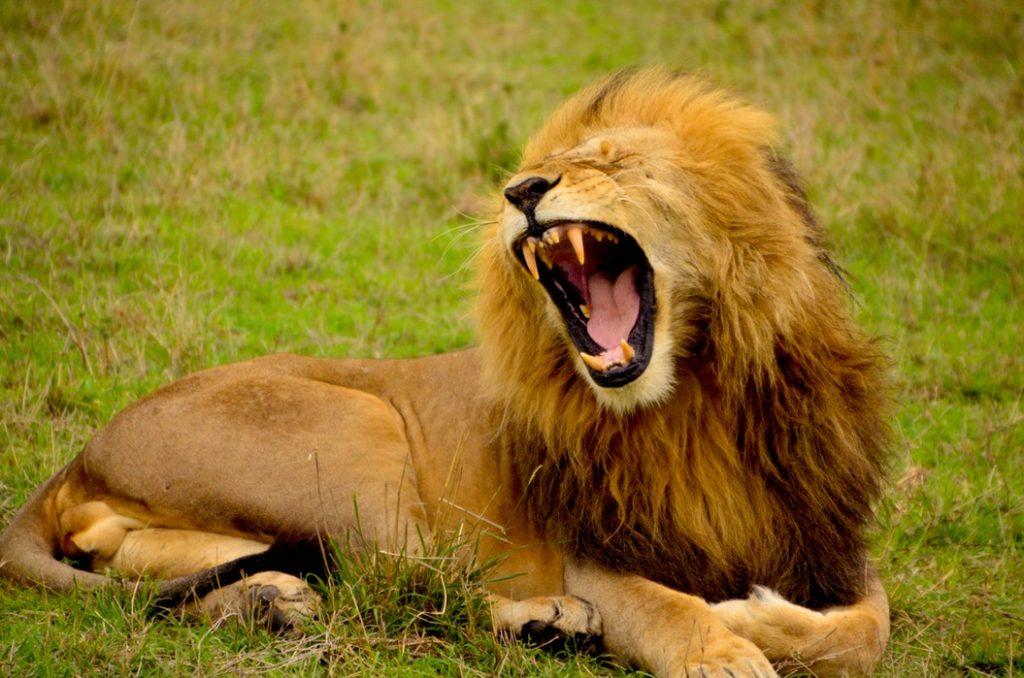 ダンデ ライオン 意味