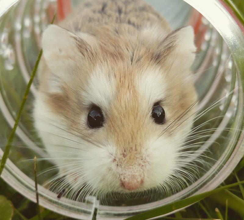 窮鼠猫を噛むの意味とは?類語は?例文や由来(語源)を超簡単に紹介!