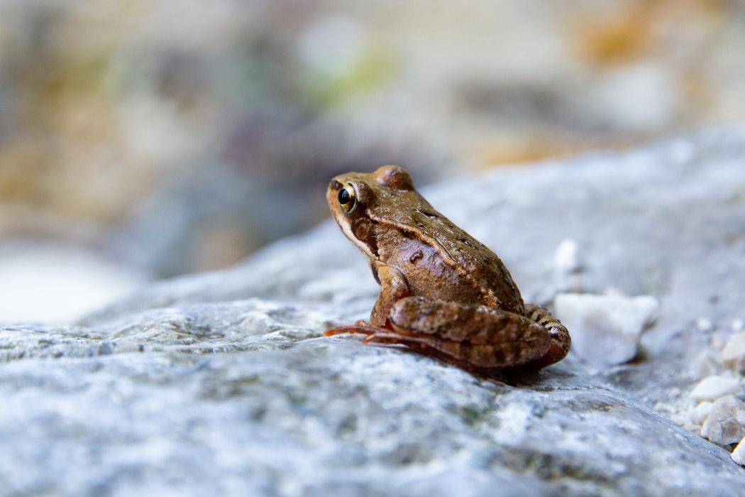井の中の蛙の意味とは?されど/大海を知らずとの関係は?故事成語なの?