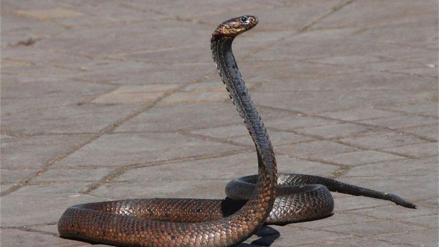 蛇足の意味とは?簡単な短文(例文)や由来を紹介!そもそも故事成語?